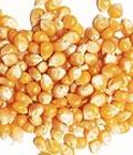 冬季食品-玉米