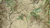 2007年北方大部遭遇干旱
