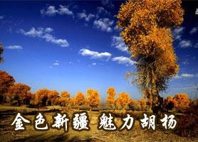 金色新疆·魅力胡杨