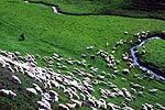 放松心情 驰骋呼伦贝尔大草原