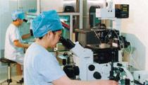 王树玉主任在显微镜下进行胚胎移植操作