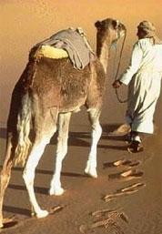 """大漠里的寻""""绿""""之旅"""