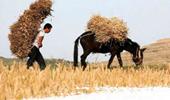 坎昆气候大会  中国公民社会应对气候变化