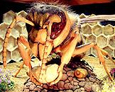 广州跨世纪机器人博览会,森林世界大黄蜂 Hornet