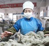 鄂尔多斯,中国时装现时,羊绒,1436,搜狐