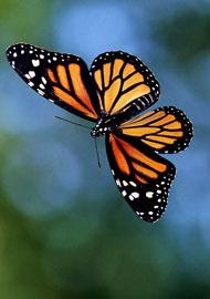 搜狐绿色 2010国际生物多样性年