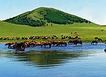 乌兰布统草原 广袤草原去追风