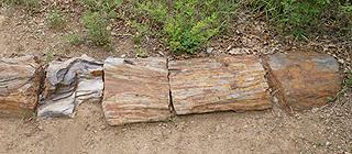 化腐朽为神奇 奇特的石头森林