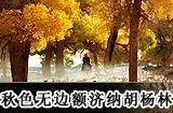 额济纳胡杨林旅游攻略
