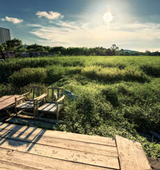 香港有机农场 体验惬意生活