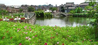 岭南印象园赏波斯菊与向日葵