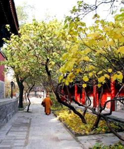 百花深处有暗香 北京秘境的那些隐秘事