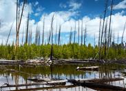 美国森林美景
