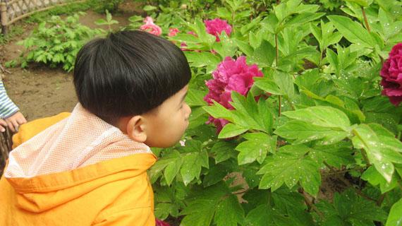 幼儿公园看花图片