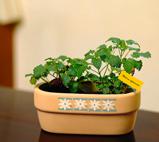 可爱的蔬菜小盆栽