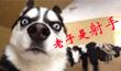 12星座狗狗性格解析