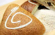学用老面做面包