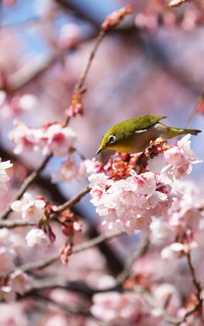 春日的期待