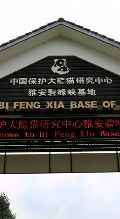 碧峰峡大熊猫基地
