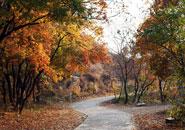 京郊看红叶也能很从容