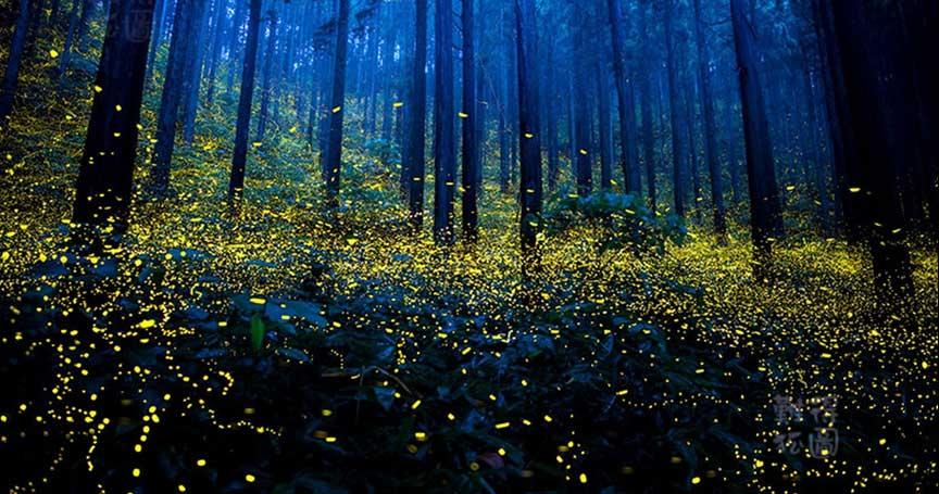 美丽的秋天图片梦幻森林图片