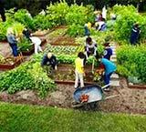 美国人为什么不在院子种菜