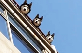 三狗凝望楼下傻笑三人组